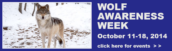 Wolf-awareness-week